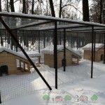 Păsările de iarnă în case