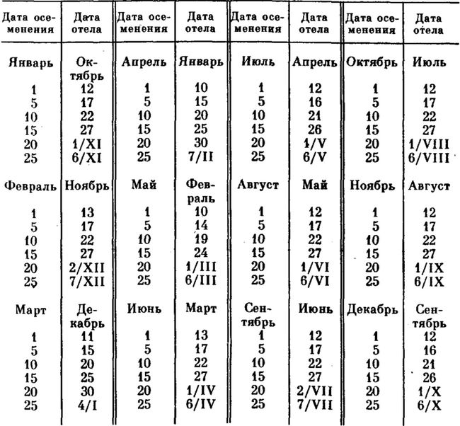 Tehotenský kalendár krava