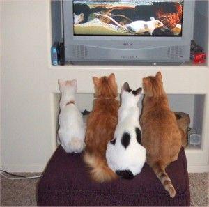 Филм за котки