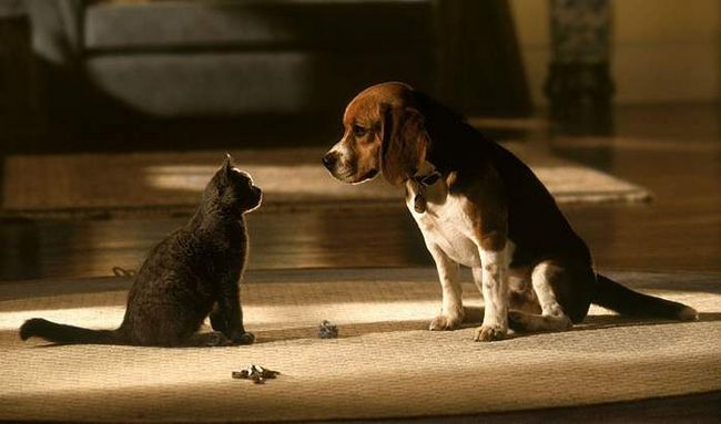 Mačke Psi (Cats & amp; Dogs). Fotografije iz filma.