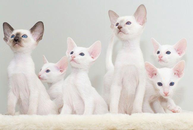 Kittens Alb Externe