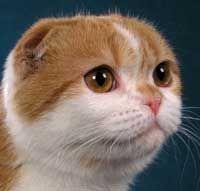 Cap de pisică formă rotundă