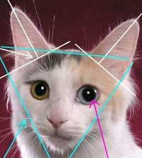 Capul este triunghiular în formă de pisică