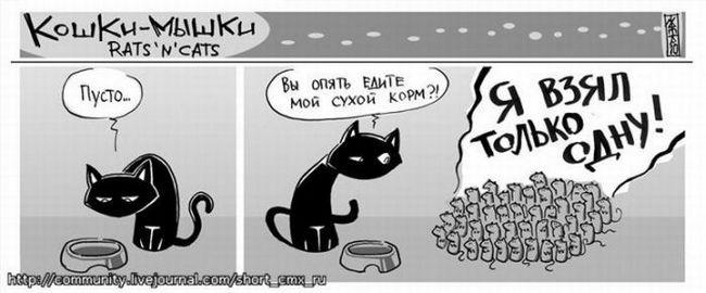 Prietenia de pisică și de câine. fotografie