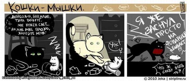 relație Afectuos de pisică și de câine. fotografie