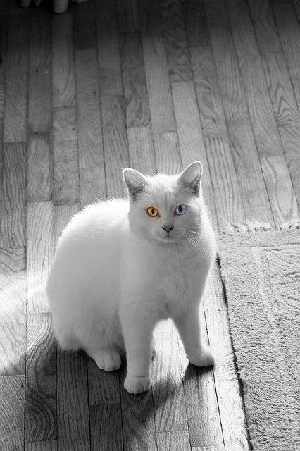 Prietenie Animal: Pisica flirtezi cu un câine. fotografie
