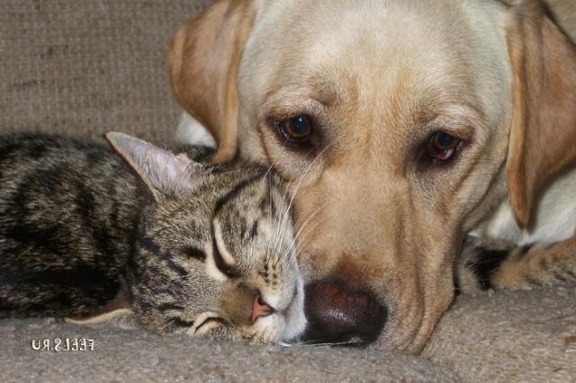 Krásne a vtipné mačky (57 ... Mačky a psy