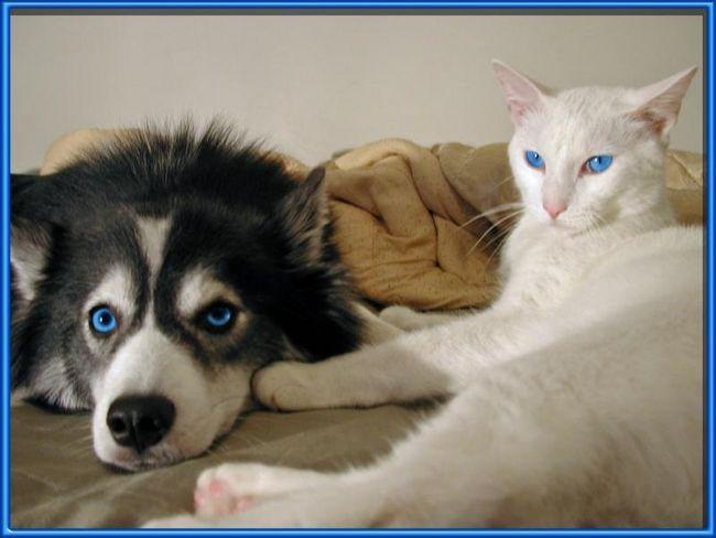 Zviera krásny mačka mačka ..