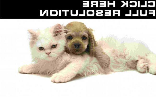 Zoogostinitsa a mačky ..