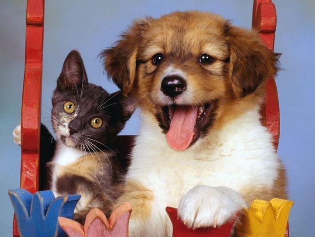 Fotografie mačiek a psov ..