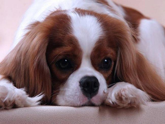 Krásne fotky psov ..