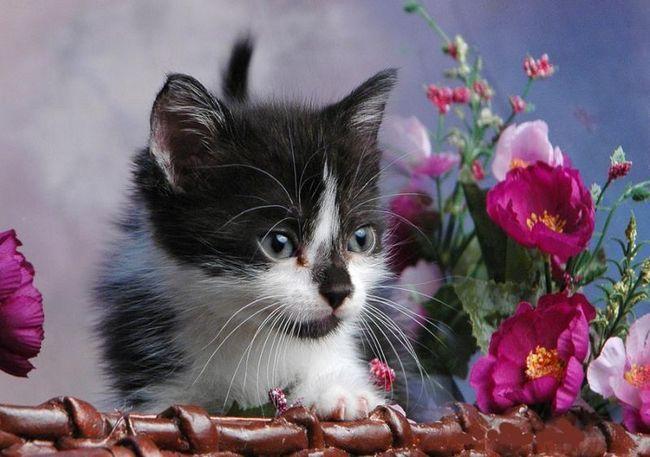 mačka a kvety, psov - akmaya - Blog.ru ..
