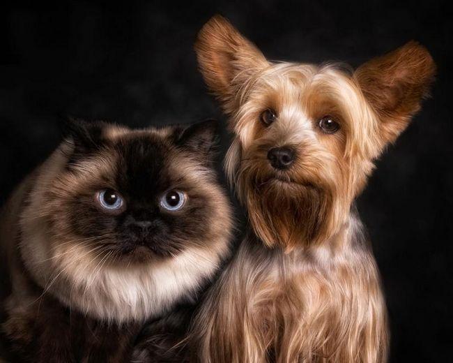 Animované obrazy s mačkou ..