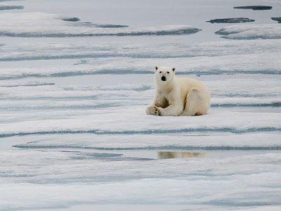 Gdje za lov polarnih medvjeda