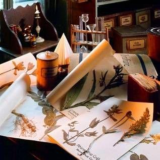 Herbarium: pojam, povijest, aplikacija. Pravila za izradu i čuvanje Herbarium