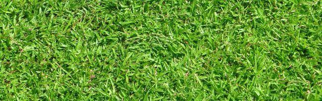 Herbicídy na kontrolu buriny a hnojivá kŕmiť trávu