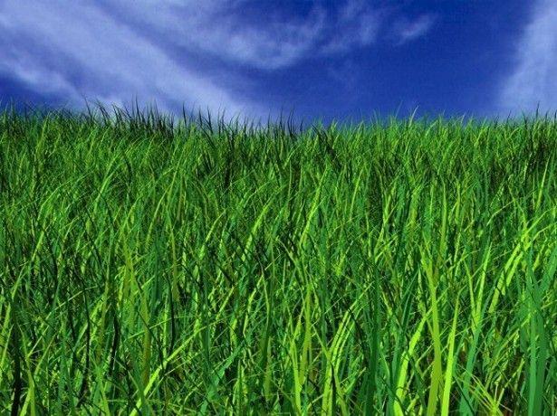 Vo fotografiu trávnik trávy