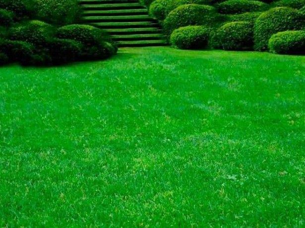 fotografie trávnik