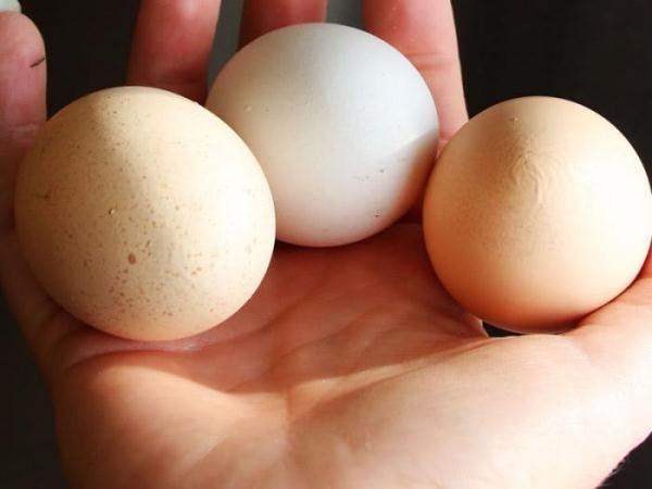 Hercules slepačie vajcia