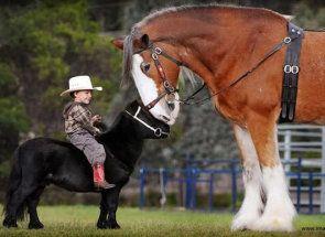Giants jazdecký svet: kto sú najväčšie kôň?