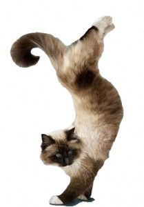 Гимнастика за котки