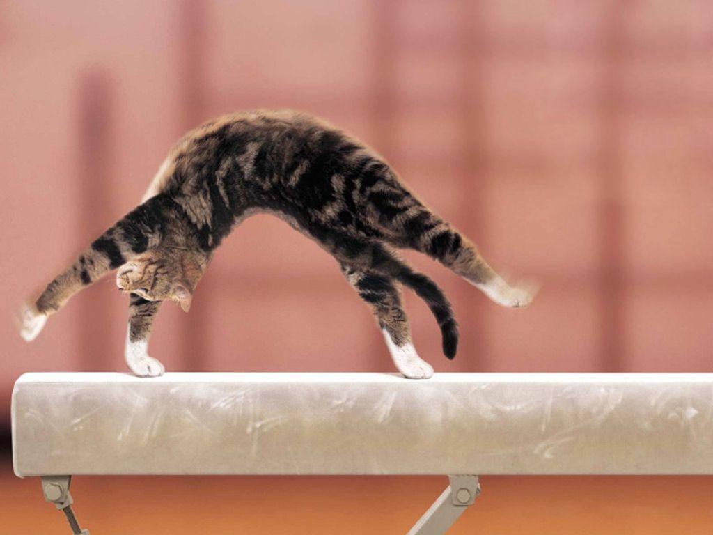Gymnastika pre mačky