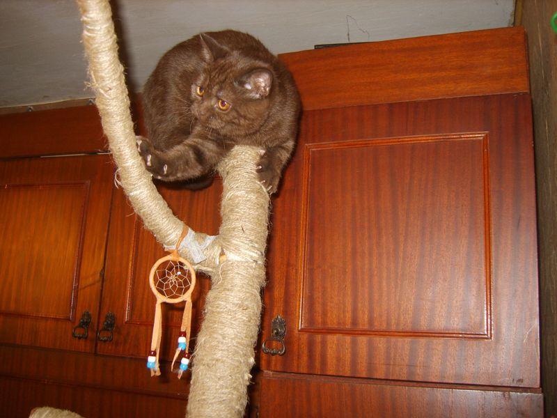 Gymnastika pre domáce mačky