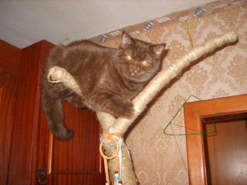 Gymnastika pre mačky žijúce v byte