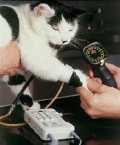 измерване на налягането при котките