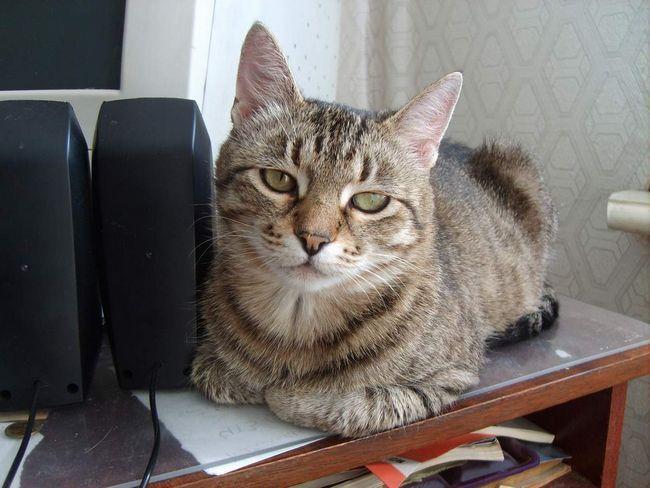 Prevencia hypertyreózy mačkovité šelmy.