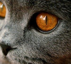 ochi de pisica lui