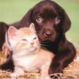 Worms v domácim zvieratkom: druhy, príznaky, prevencia opatrenia antihelmintikám pre psov a zariadení (kedy a ako dať)
