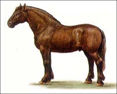 Ruská ťažký ťažný kôň Russian Heavy Predloha. Kresba, chovu koní imidž