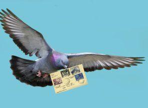 Golubovi - krilati poštari
