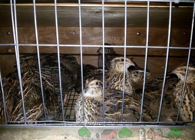 Malí vtáky v klietke