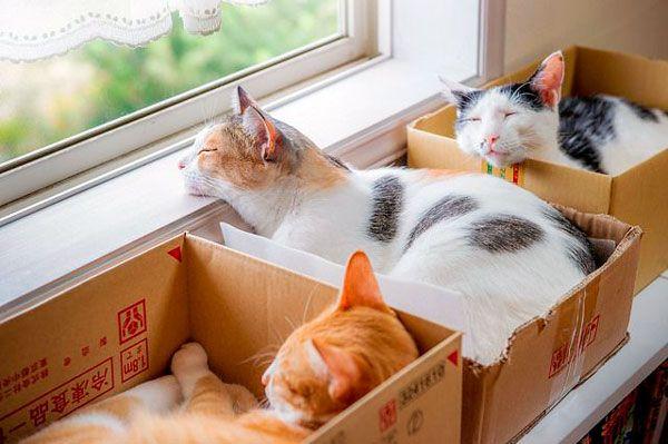 Hra na schovávačku, alebo bojovať so stresom, prečo mačky milujú kartónových krabíc