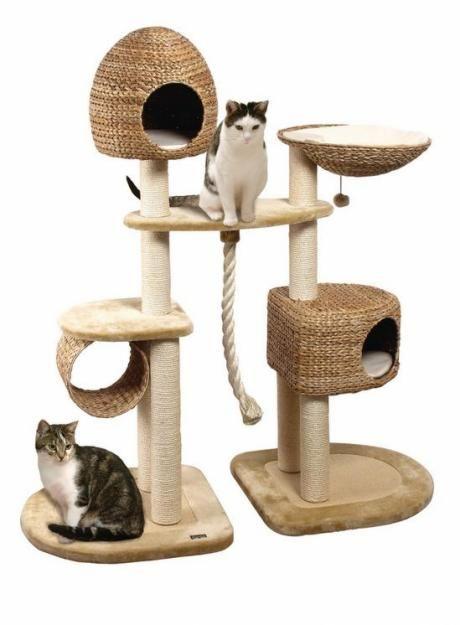 Hrajú Centrum pre mačky