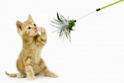 Hračky pre mačky