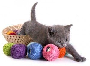 Jucării pentru pisici cu propriile lor mâini