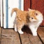 Meno pre chlapcov mačiatko
