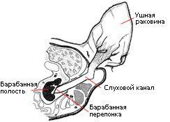 Štruktúra mačky do ucha