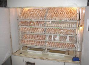 Инкубатор - вторият живот на стар хладилник