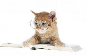 Интелигентност котка