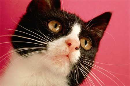fúzy mačka