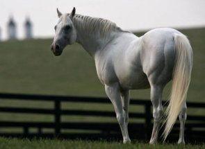 Čo je u koní: demontovať anatómia