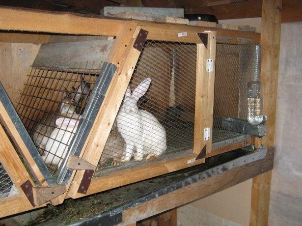 Na fotografii králikov v klietke