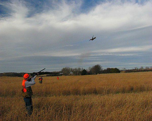 lov jesen za fazana