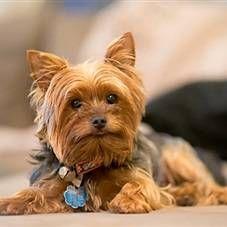 Elektroosheyniki pre psov - ako si vybrať a efektívne využívať