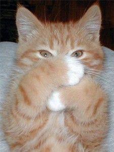 Ako dať mačke tabletku