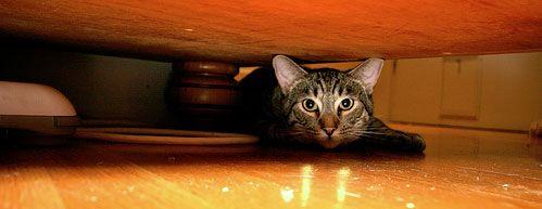 Mačka pod posteľou